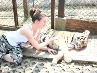 Tiger Kingdom: Sanctuary or Sham?