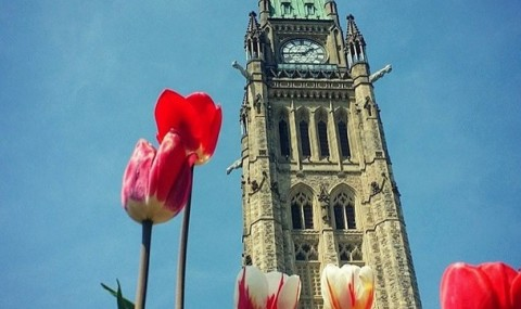 A Bloom of Friendship: The Story of the Ottawa Tulip Festival