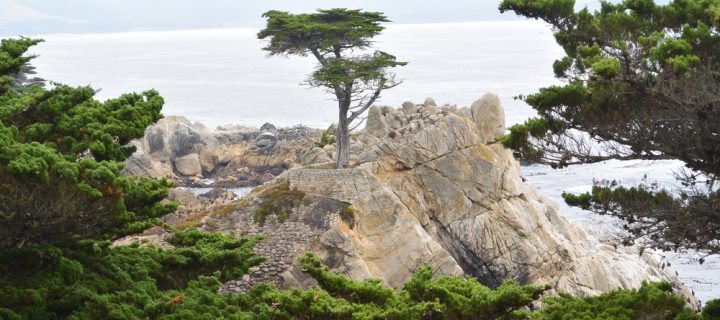 10 Must-See Stops Along Scenic 17-Mile Drive